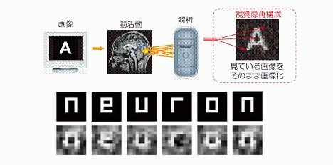 neuron-brain-image